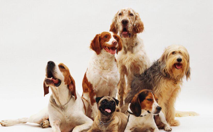 Journalistes juniors : la vie des chiens, par Patrycja